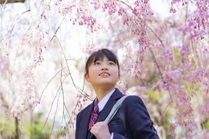 桜と女子学生の写真素材 [FYI04788908]