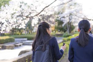 桜と女子学生2人の後ろ姿の写真素材 [FYI04788938]