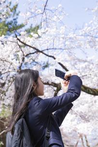 桜をスマートフォンで撮影する女子学生の写真素材 [FYI04788941]