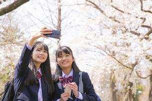 スマートフォンで自撮りをする女子学生2人と桜の写真素材 [FYI04788946]