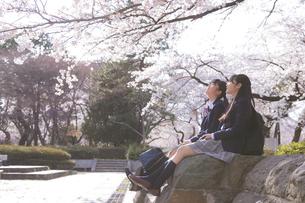 桜咲く公園の女子学生2人の写真素材 [FYI04788948]