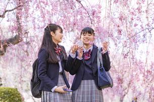 桜と女子学生2人の写真素材 [FYI04788952]