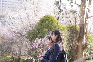 桜咲く公園の女子学生2人の写真素材 [FYI04788953]