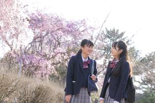 桜咲く公園の女子学生2人の写真素材 [FYI04788954]