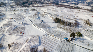 雪に覆われたりんご農園の写真素材 [FYI04789264]
