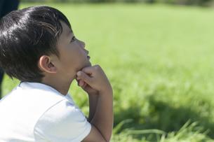 草原で空を見上げる子どもの写真素材 [FYI04789513]