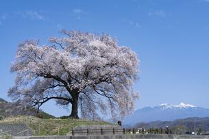 わに塚の桜と八ヶ岳の写真素材 [FYI04789737]
