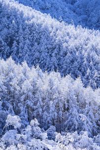 樹氷の森の写真素材 [FYI04789880]