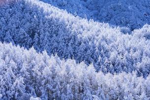 樹氷の森の写真素材 [FYI04789881]