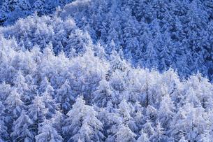 樹氷の森の写真素材 [FYI04789882]