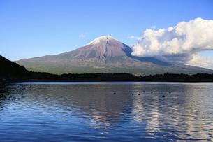静岡県 田貫湖より望む富士山の写真素材 [FYI04789994]