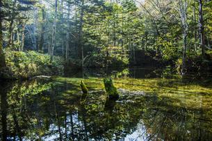 北海道の自然と緑に包まれた美しく神秘的な神の子池の写真素材 [FYI04790034]