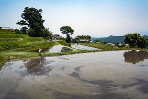 奈良御所市風の森の大杉(大川杉)の写真素材 [FYI04790087]