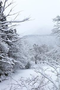 冬の白川郷 木立の雪景色の写真素材 [FYI04790169]