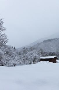 冬の白川郷 木立の雪景色の写真素材 [FYI04790314]