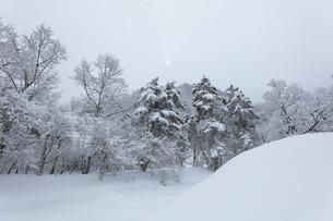 冬の白川郷 木立の雪景色と空に太陽の写真素材 [FYI04790316]