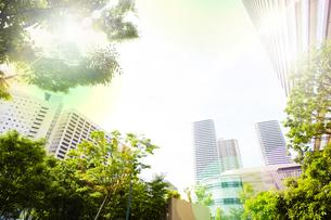 朝日に包まれる武蔵小杉の高層マンション群の写真素材 [FYI04790916]