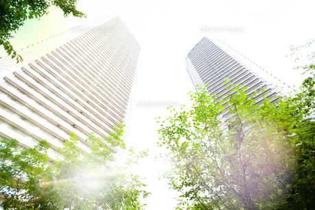 朝日に包まれる武蔵小杉の高層マンション群の写真素材 [FYI04790917]