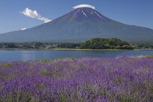 富士山とラベンダー畑の写真素材 [FYI04790973]