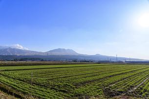 阿蘇山 美しい雪景色 阿蘇五岳(根子岳・高岳・中岳・烏帽子岳・杵島岳)2021年冬の写真素材 [FYI04791005]