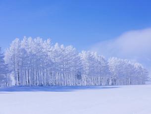 霧氷と青空 の写真素材 [FYI04791393]