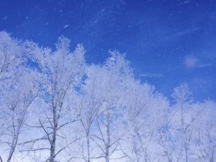 霧氷と青空 の写真素材 [FYI04791395]