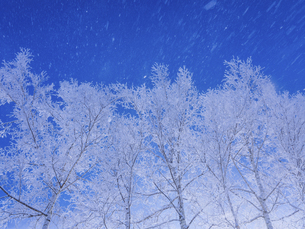 霧氷と青空 の写真素材 [FYI04791396]