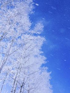 霧氷と青空 の写真素材 [FYI04791398]