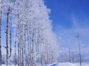 霧氷と青空 の写真素材 [FYI04791399]