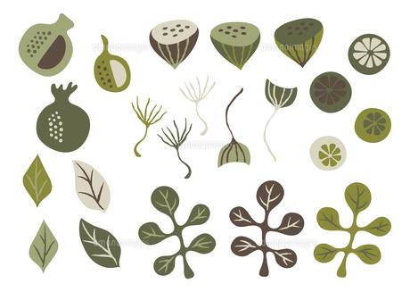 葉っぱ 木の実 植物 アイコンのイラスト素材 [FYI04791428]