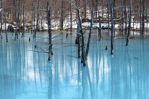 雪が残る春の青い池 美瑛町の写真素材 [FYI04791865]