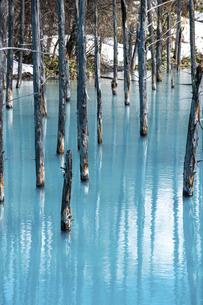 雪が残る春の青い池 美瑛町の写真素材 [FYI04791866]