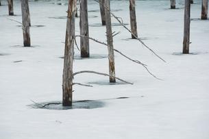 雪が残る春の青い池 美瑛町の写真素材 [FYI04791881]