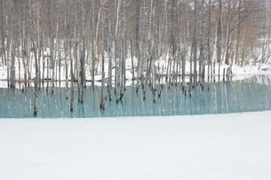 雪が残る春の青い池 美瑛町の写真素材 [FYI04791889]