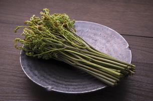 春の山菜 わらびの写真素材 [FYI04792043]