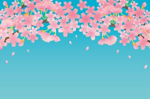 桜のイラスト素材 [FYI04792205]