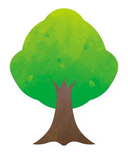 木のイラスト素材 [FYI04792250]