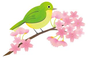メジロと桜のイラスト素材 [FYI04792254]