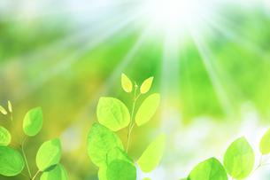 新緑の木の写真素材 [FYI04792419]