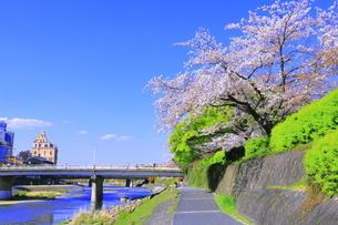 サクラの咲く鴨川の写真素材 [FYI04792480]