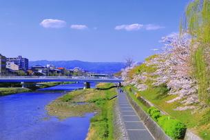 鴨川と桜の写真素材 [FYI04792493]