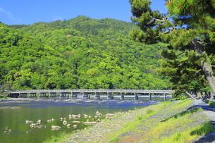 新緑の嵐山と渡月橋の写真素材 [FYI04792502]