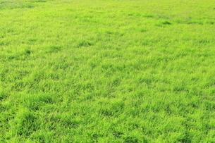 芝生の写真素材 [FYI04792514]