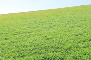 芝生と青空の写真素材 [FYI04792515]