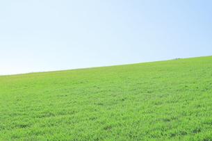芝生と青空の写真素材 [FYI04792516]