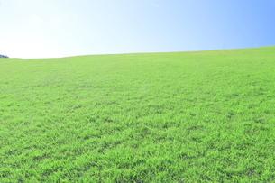 芝生と青空の写真素材 [FYI04792517]