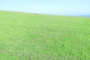 芝生と青空の写真素材 [FYI04792519]