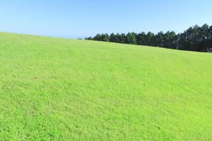 芝生と青空の写真素材 [FYI04792520]
