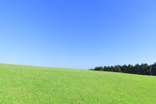 芝生と青空の写真素材 [FYI04792522]