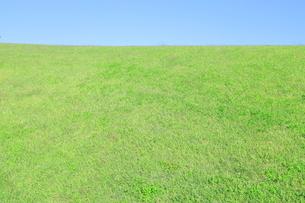 芝生と青空の写真素材 [FYI04792524]